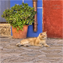 (045/15) Relax gatuno (Pablo Arias) Tags: friends espaa amigos photoshop spain colours colores nikond50 alicante animales hdr smrgsbord finestrat photomatix tamron18250 olequebonito greatmanipulart grouptripod oltusfotos goldenvisions pabloarias kddsflickr minikdds