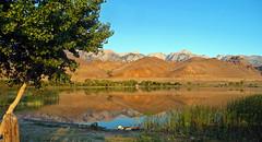 Sunrise on Lake Diaz, Serra Nevada, CA 6-16 (inkknife_2000 (6.5 million views +)) Tags: california reflection sunrise reeds stillwater mtwhitney sierranevada firstlight newday waterreflections lakediaz tallestpeakinusa volcanicmounds