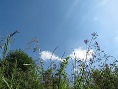 ckuchem-1227 (christine_kuchem) Tags: himmel gras garten perspektive froschperspektive grashalm