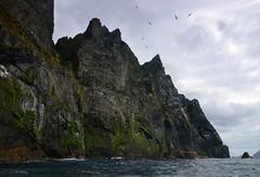 Mighty cliffs, flying birds (supersky77) Tags: boreraray stkilda scotland scozia unesco unescoheritage island isola ecosse oceano atlantico atlantic ocean atlanticocean oceanoatlantico gannet sula sulabassana morusbassanus