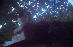 Vocal Kitty 1 (a.ninguem) Tags: pentax k1000 ubatuba film kodak 35mm filme