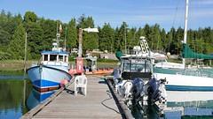 P1480983 (Tipfinder) Tags: kanada canada vancouverisland portalberni tofino ucluelet pacificrimnp long beach bearwhatching hotspringcove