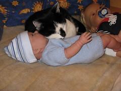 Claudia (ute_hartmann) Tags: claudia katze puppe cat doll bett schlafen