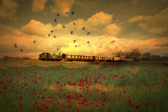Poppies (brian_stoddart) Tags: trains steam painterly poppies sky