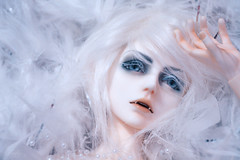 Feathers (Lorena Firefly) Tags: immortalityofsoul ios co doll dollfie demon bjd boy balljointeddoll white whitefox whitehair fox pure blue fangs pearls feathers