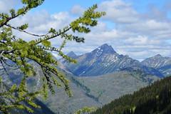 Tamarack Castle (Sotosoroto) Tags: backpacking hiking pct washington cascades mountains pasayten lakeviewridge larch branch tree