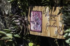 Hen and chicks (julesnene) Tags: juliasumangil julesnene succulent succulents garden california droughttolerant waterwise fanatic