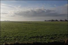 meddow (Elly Snel) Tags: ameland eiland island nl meddow weide rural wolken clouds village dorp