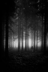 Waldlufer (sfp - sebastian fischer photography) Tags: landschaft natur oktober2016 schwarzwald landscape nature blackforest mist nebel mystical