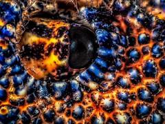 PA121989 (Jeannot Kuenzel) Tags: jeannotkuenzel jeannot kuenzel wwwjk4unet jk4u malta scuba under water underwater diving photography macro supermacro olympus epl5 zen port leica dg macroelmarit 45mm f28 asph ois inon z240 240z ucl165 s2000 moods aliensofthesea aliensofthedeepblue alien deep blue mediterranean sea maltaunderwater maltaunderwatermacro maltaunderwaterphotography bestmaltaunderwaterpictures maltamacro underwaterphotography maltascubadiving supermacrophotography underwatersupermacro underwateralien underwaterworld underwatercreature underwatermacro extrememacro superextrememacro