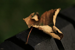 (Even) in the darkest place... (eleni m) Tags: autumn leaf bench trees dof dark herfst blad bankje bomen light licht abit eenbeetje macro