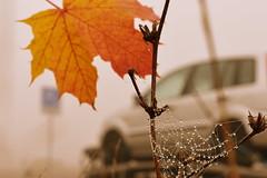 Every Story is us. Rumi (azyef94) Tags: nature naturephotography naturenerds natureshots flickrnature nikonphotography autumn drops spiderweb rainy tropfen
