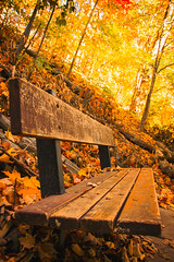 Seat under The Canopy (A Great Capture) Tags: feuilles parc banc feuillage canada ontario toronto sunnybrook park trees leaves autumn automne fall bench canopy fallcanopy colours colors light sun sunny sunshine seat sit wood wooden scenery scenic agreatcapture agc wwwagreatcapturecom adjm on canadian photographer northamerica ash2276 ashleylduffus ald mobilejay jamesmitchell herbst 2016 outdoor outdoors vibrant colorful cheerful vivid bright woods leaf foliage autumnleaves golden canopies beautiful logs natural flickr photography autumnphotography