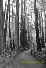 muir woods tall trees 3 5 bw 014 LR (bradleybennett) Tags: muir woods national park redwood redwoods grove hike hiking walk walking forest