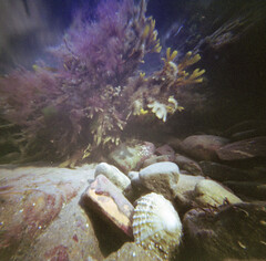 Underwater memories (wheehamx) Tags: pinhole underwater colour wide angle