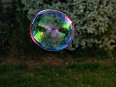 picture in a bubble  [explored] (carol_malky) Tags: soapbubble summer sunlight reflections garden rainbow colours explored