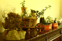 ambiencias (andrelvas) Tags: cactus plants flower garden mini worlds mundos babi suculent suculentas vieira minimundos babivieira