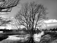 Brinker's Tree (Emil de Jong - Kijklens) Tags: white black tree zwartwit hans boom dijk alkmaar dike brinker