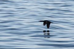 IMG_0659_modified-crop (e_grosh) Tags: november washington portangeles whales straitofjuandefuca