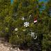 Trees_of_Loop_360_2014_046