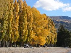 IMG0243 (hamilton_lee) Tags: autumn newzealand otago wanaka poplars