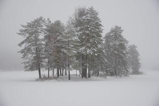 Oslo winterland in fog