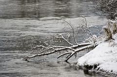 Reaching the water (SusanCK) Tags: snow landscape leavenworth susancksphoto