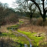 The Icknield Way near Lilley thumbnail