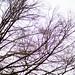 Tree - BW