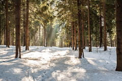 winterwarm (verlassdiestadt) Tags: schnee winter tschechien sachsen wald erzgebirge fichtelberg verlassdiestadt