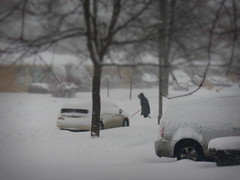 February 1, 2015 12:00 pm (Renee Rendler-Kaplan) Tags: street trees homes winter snow cars canon gbrearview branches sunday blowing neighborhood lamppost someone snowing suburb noon february bushes shoveler automobiles enfield gapersblock drifting wbez shoveling chicagoist 2015 theviewfromhere andmoresnow skokieillinois reneerendlerkaplan chiberia canonpowershotsx40hs