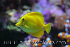 Blog: Planes en familia con nios: Visita al acuario de Donostia San Sebastin, el Aquarium (Iigo Escalante) Tags: sea pez water aquarium mar agua peces donosti sansebastian euskadi acuario paisvasco cantabrico