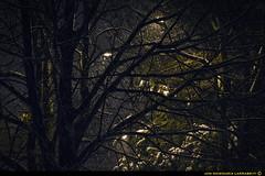 Midlight. (jongoikoh) Tags: trees winter light urban naturaleza snow cold green nature noche arboles nieve baraain natura arbres midnight pays basque vasco nite frio mystic navarre pais nigh mistery elurra navarra gau euskal herria nafarroa gaua zuhaitzak hotz mistico hotza edurra mistiko midlight entreluz metropolotan gaualde