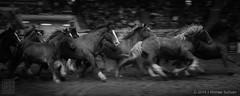 Denver Rodeo, Roundup (JMichaelSullivan) Tags: horses bw 100v mono 10f denver rodeo 200v stampede 500v 300v 5f 15f 400v