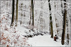 La fort en blanc (Excalibur67) Tags: trees winter white snow nature forest nikon hiver arbres neige blanc d90 greatphotographers vosgesdunord forts afsdx35f18g