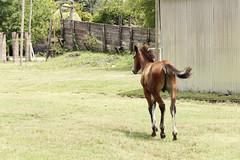 De algún instinto animal (Lucas Croce) Tags: life wild horse argentina animal digital canon caballo eos buenosaires bavio 60d