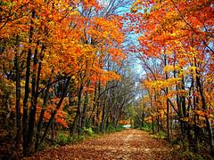magical moments (LotusMoon Photography) Tags: road autumn red orange color fall leaves yellow colorful seasons path walk vivid vividcolor