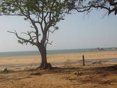 Indian Ocean Coastline in Yala