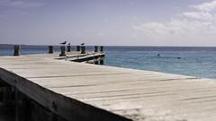 _DSC4523 (Pherit) Tags: ocean blue sea sun seagulls beach birds mexico bay coast pier dock sand nikon waves gulf horizon palm resort dreams caribbean sands spa cancn 2016 d810