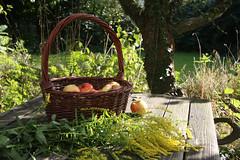 ckuchem-2048 (christine_kuchem) Tags: tisch korb deko dekoration apfelernte naturgarten herbstgarten