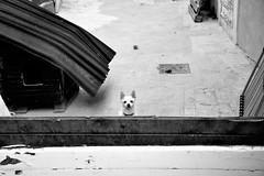 The guard (pieroemme) Tags: street bw dog black art animal nikon sicily flikr sicilia streetphotograpy 18140 d7100