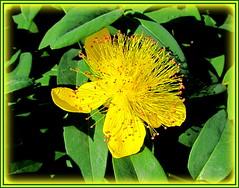 Im Sonnenschein...... (Explore) (relibu) Tags: blumen blten sonnenschein flower