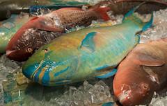 Painted Fish (brentus69) Tags: vacation food usa holiday fish hawaii nikon chinatown market unitedstatesofamerica tourist seafood honolulu colourful parrotfish d4 nikond4
