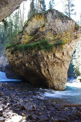 Turning the corner (Andrew Pizzinato) Tags: river johnstoncanyon tree trees hiking water