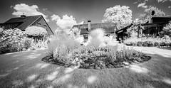 Infrarot (petra.foto on/off) Tags: infrarotfotografie weitwinkel schwarzweiss monocrom garten fotopetra sony germany sommer bume pflanzen nature