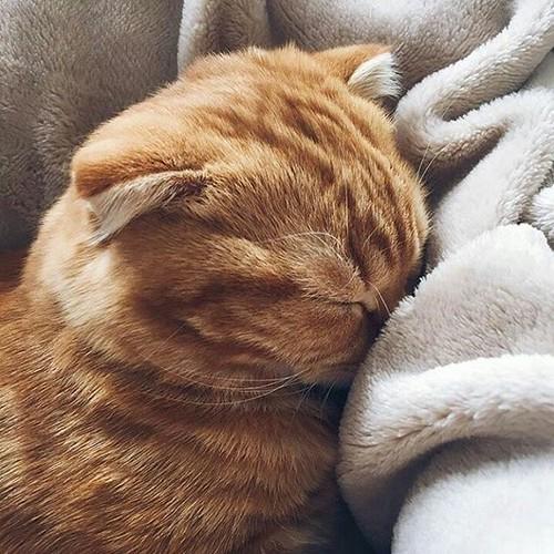 Boa noite 🌃  #goodnight #catsofinstagram #cats #socute #instacats