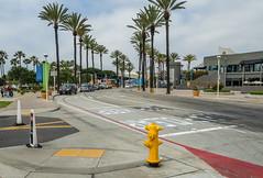 Long Beach, California (Anthony's Olympus Adventures) Tags: longbeach california usa america street circuit road streetscape aquariumway aquarium grandprixoflongbeach losangeles trees palm city downtown corner sky
