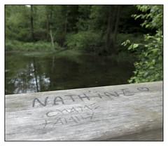 Rennes Forest #9 (Oeil de chat) Tags: fujifilm x20 couleur foret vert nature serie promenade