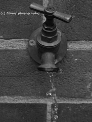 Dripping tap. (MAMF photography.) Tags: art arty blackandwhite blackwhite bw britain biancoenero water d3200 d7100 england enblancoynegro flickrcom flickr google googleimages gb greatbritain greatphotographers greatphoto garden inbiancoenero image july ls27 mamfphotography mamf monochrome morley morleyleeds nikon noiretblanc noir negro north nikond7100 northernengland photography pretoebranco photo sex schwarzundweis schwarz summer uk unitedkingdom upnorth variablendfilter westyorkshire wet yorkshire zwartenwit zwartwit zwart blanco blancoynegro blancoenero