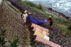 32-717 (ndpa / s. lundeen, archivist) Tags: nick dewolf nickdewolf 32 reel32 color photographbynickdewolf 1970s 1972 fall film 35mm winter republicofchina taiwan taiwanese china chinese rural rurallife people women working washingclothes clothes doinglaundry river riversedge rocks youngwomen baskets hats conicalhats traditionalhats riverbank sheets dryinglaundry laundry dryingsheets blankets dryingblankets levee 1973